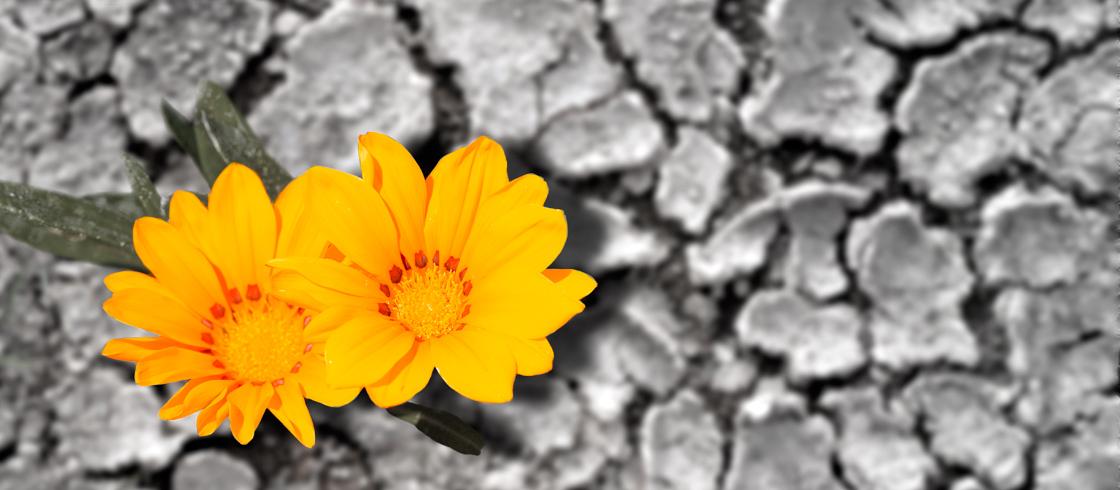 bloemen_dicompass